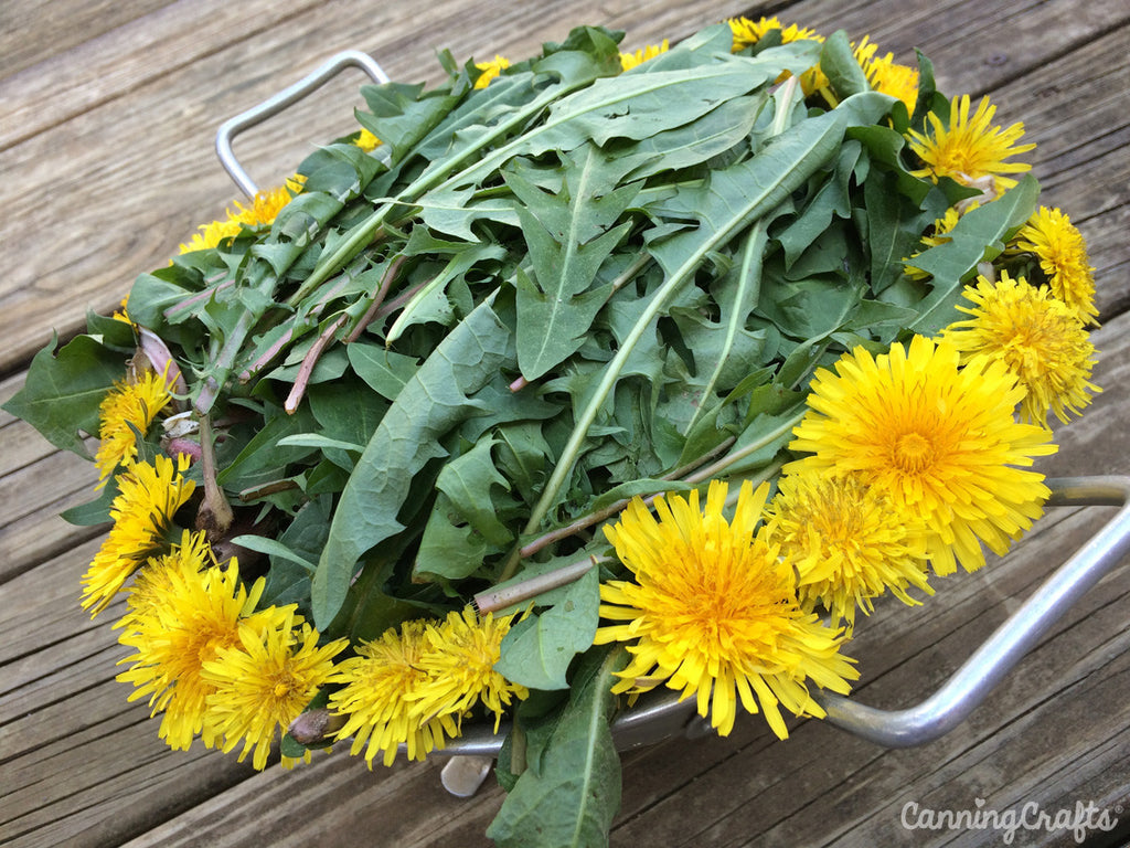 dandelion greens | CanningCrafts.com