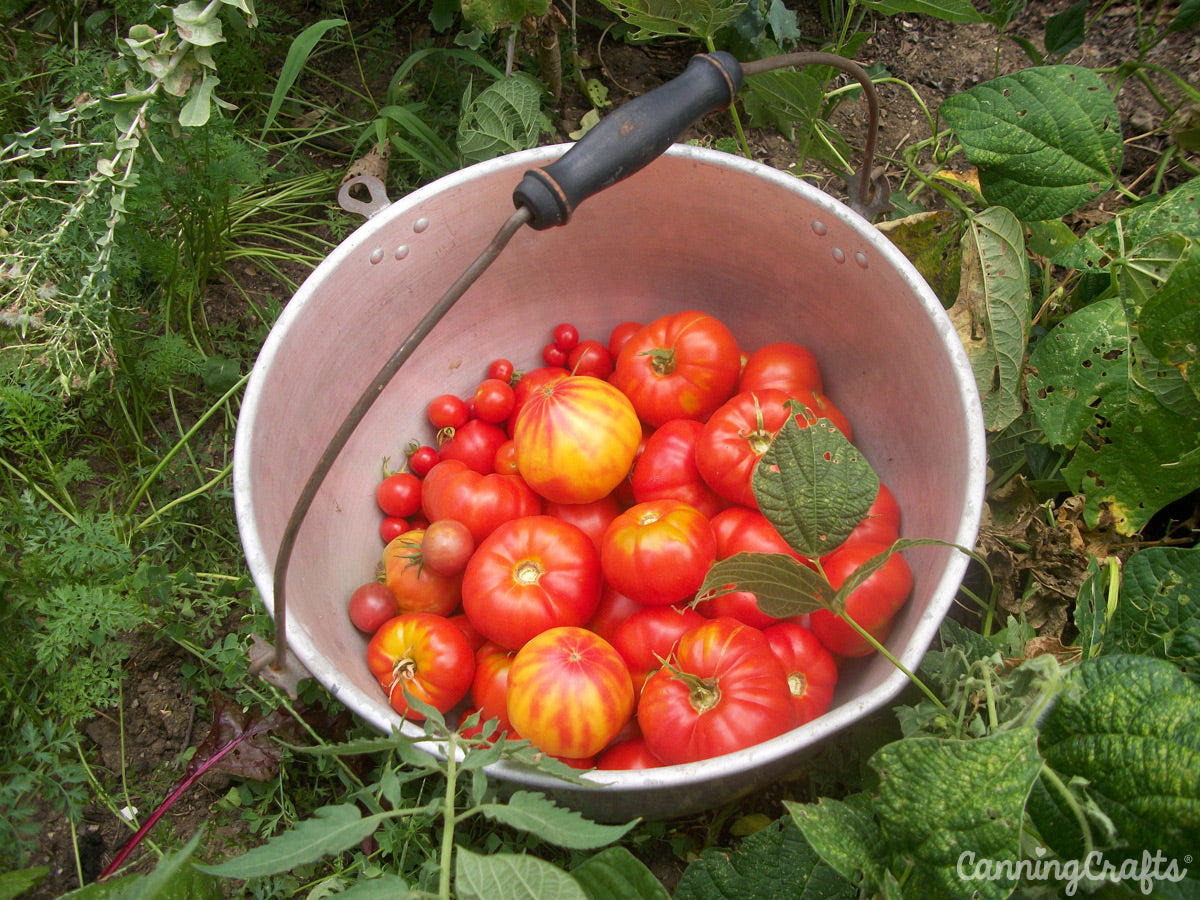 Heirloom tomatoes CanningCrafts