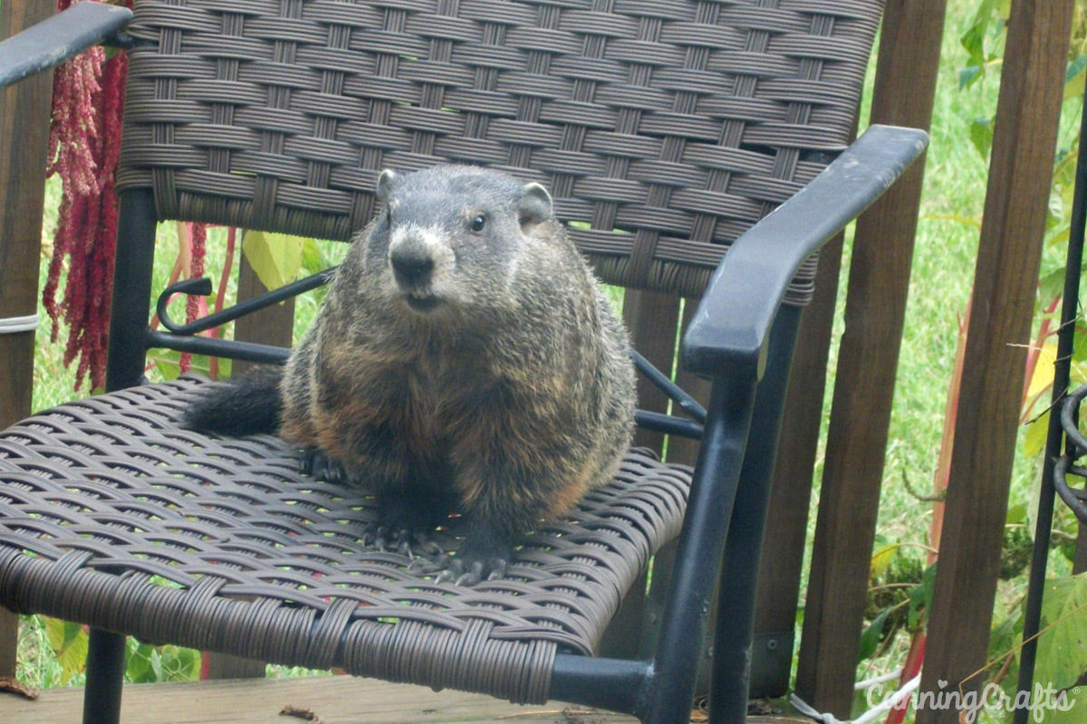Hermie the Groundhog CanningCrafts