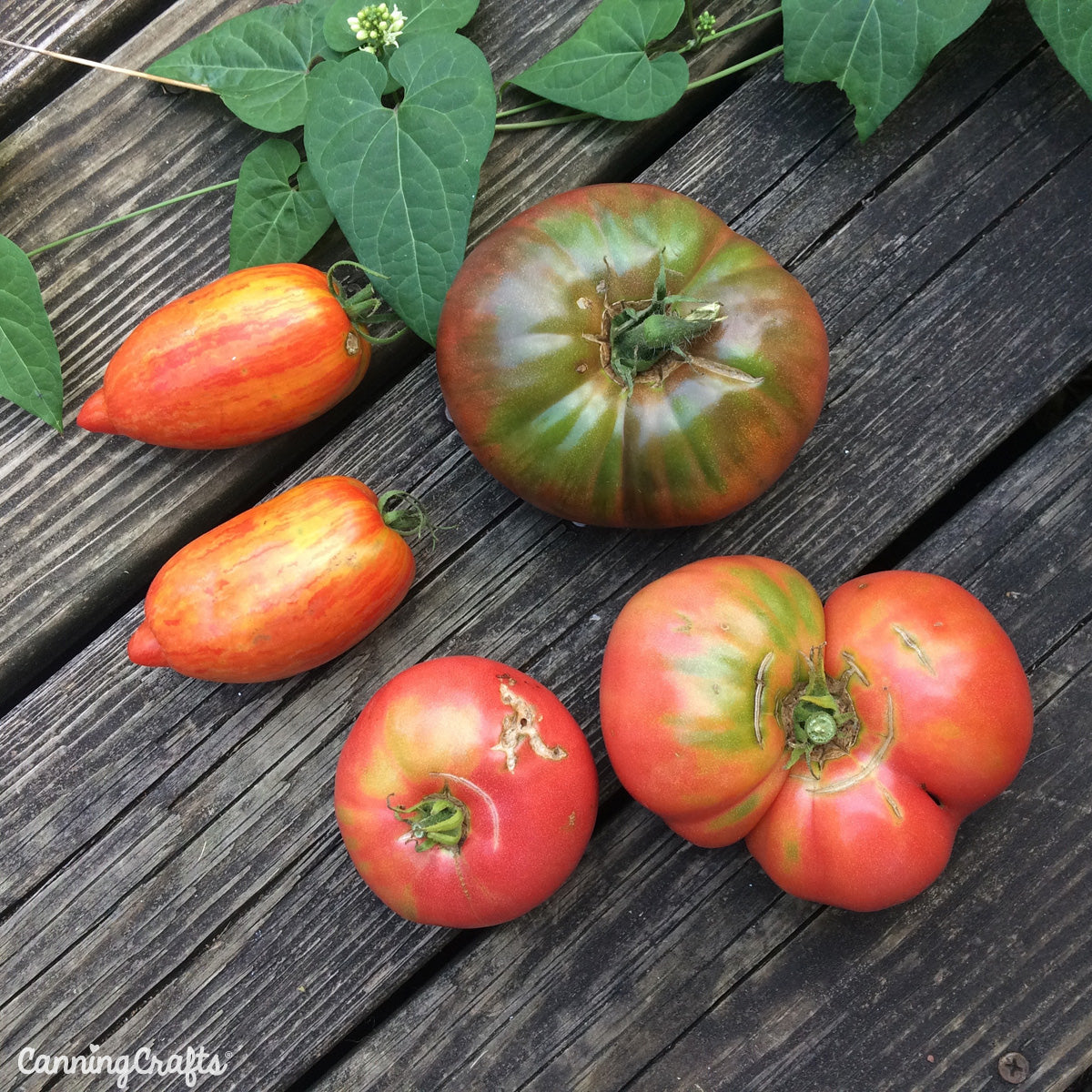 CanningCrafts.com Heirloom tomatoes Cherokee Purple, Mortgage Lifter, Romas