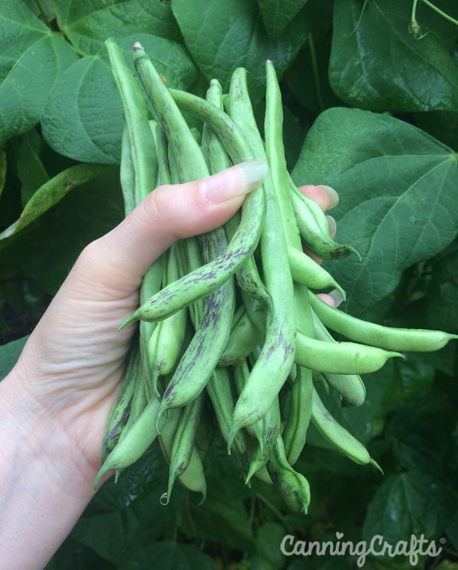 CanningCrafts garden 2018: Pole Beans