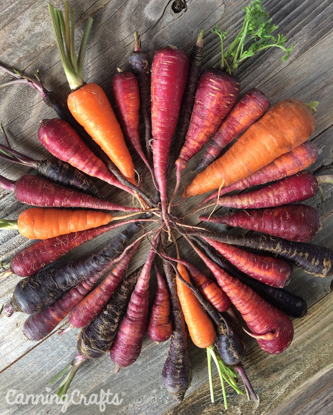 CanningCrafts garden 2018: Cosmic purple, kuroda, & black nebula carrots