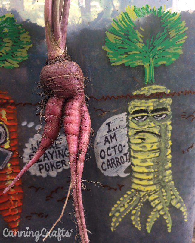 CanningCrafts garden 2018: Cosmic Purple carrots with legs