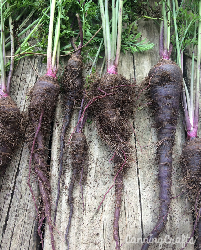 CanningCrafts garden 2018: Hairy black nebula carrots