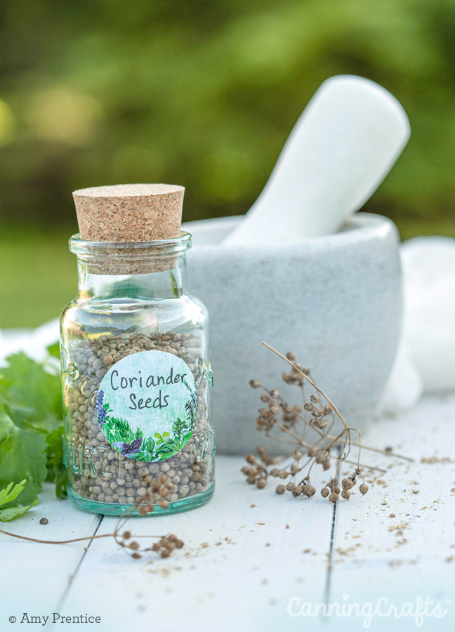 Coriander with mortar & pestle | CanningCrafts.com