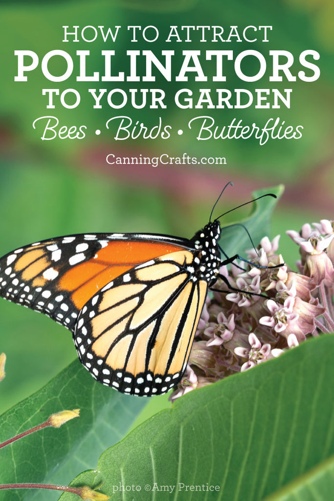 How to attract pollinators such as bees, birds, & butterflies, to your garden | CanningCrafts.com