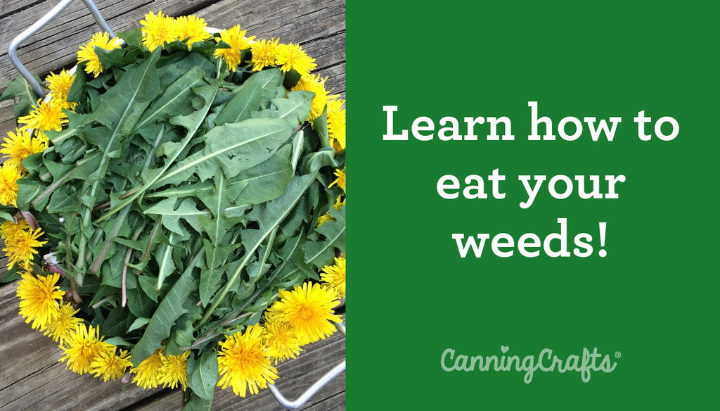Using Dandelions for Food and Medicine