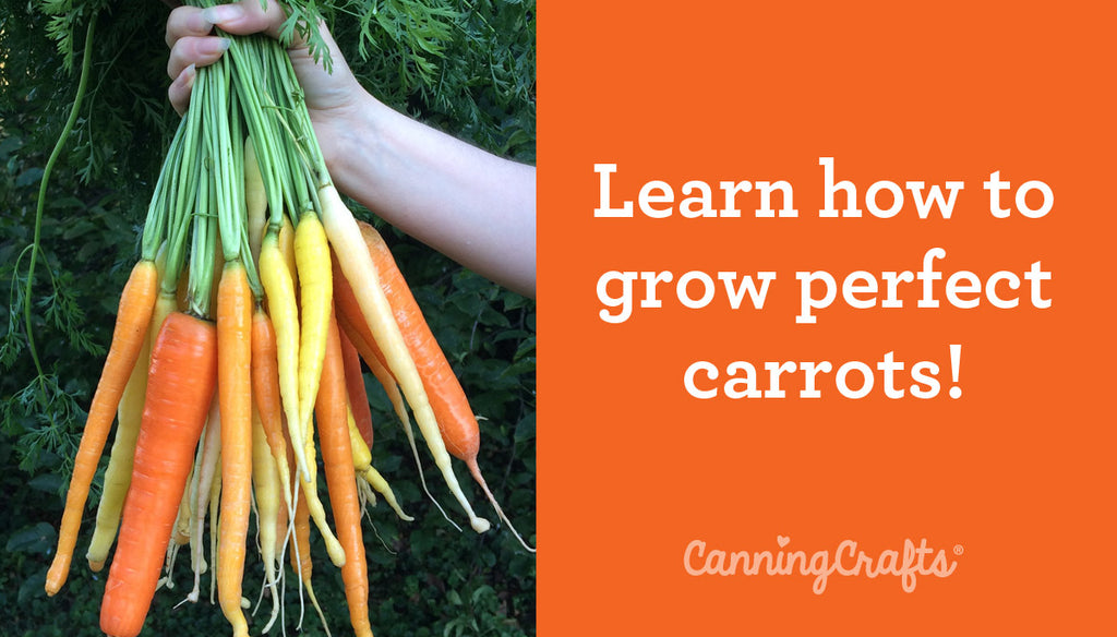 Planting Carrots in Containers with Homemade Potting Soil Recipe | CanningCrafts.com