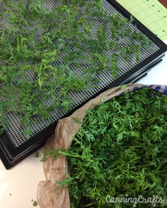 Dehydrating Carrot Greens | CanningCrafts.com