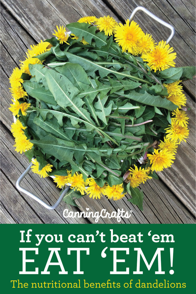 Nutritional benefits of eating dandelion | CanningCrafts.com