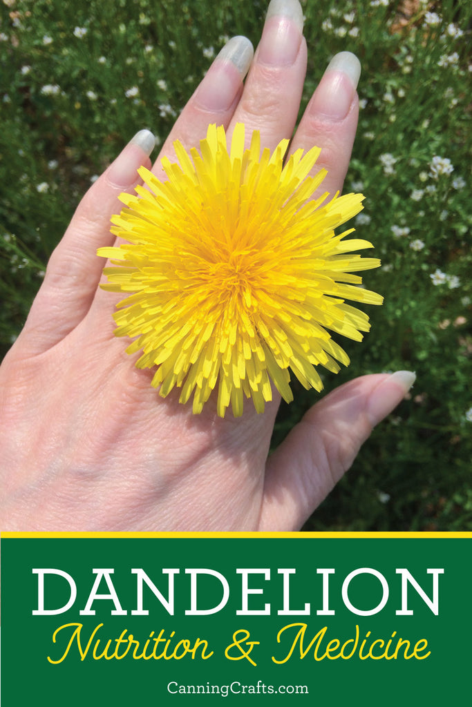 Using Dandelions for Food & Medicine | CanningCrafts.com