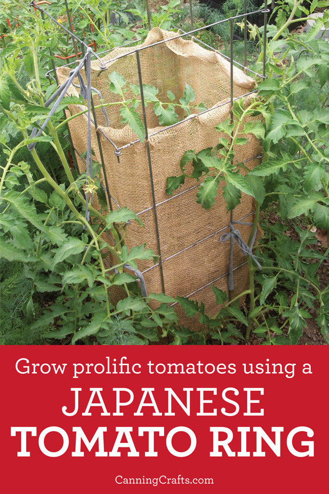 Japanese Tomato Ring growing method | CanningCrafts.com