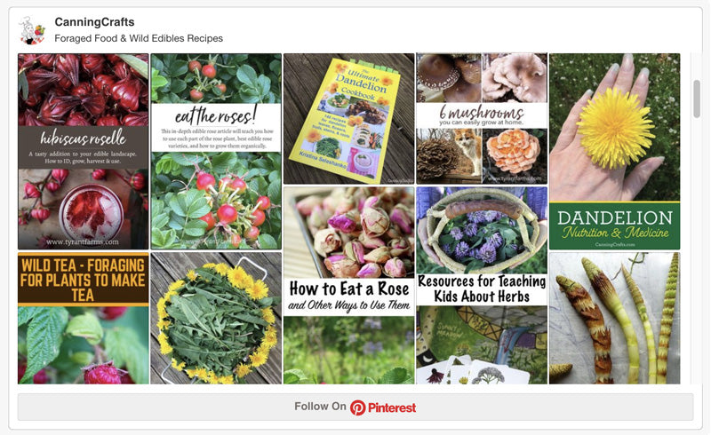 Foraged Food & Wild Edibles Recipes