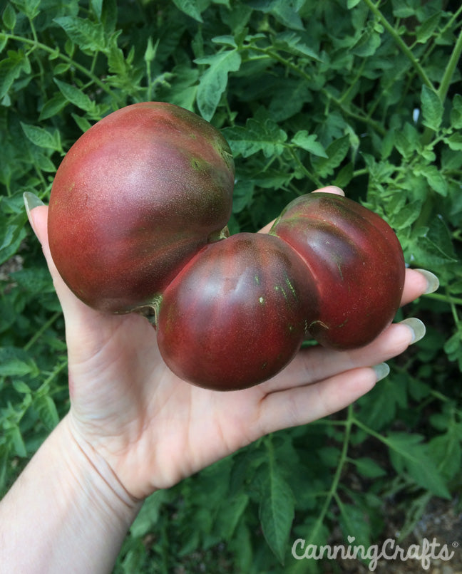 Garden 2019: Black Krim Tomato with Catfacing | CanningCrafts.com