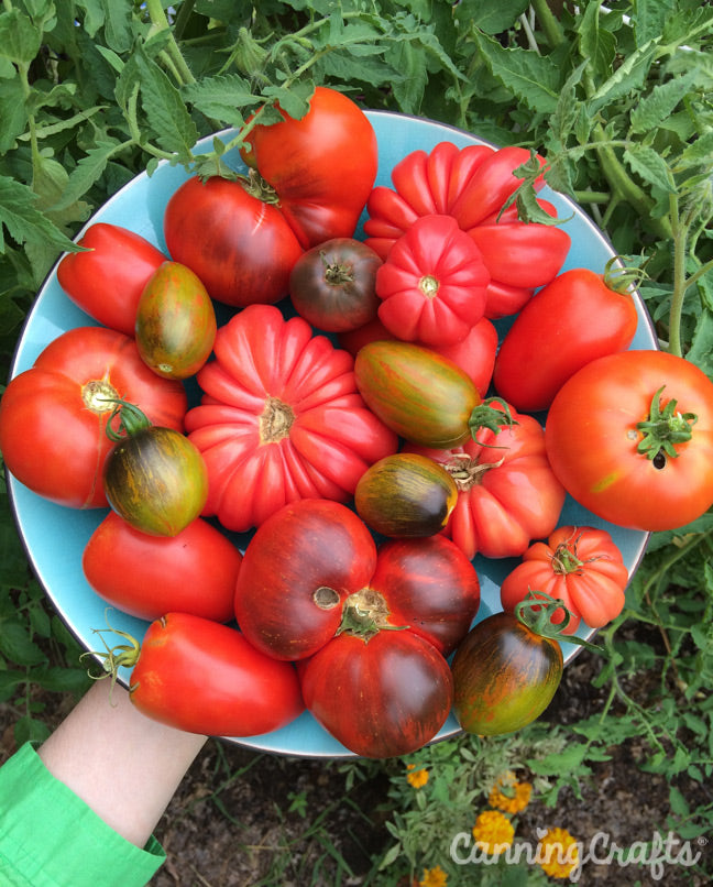 Garden 2019: Heirloom Tomatoes | CanningCrafts.com