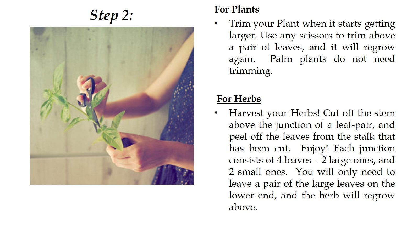 Midorie Garden_Pafcal_Care Instructions_Step 2