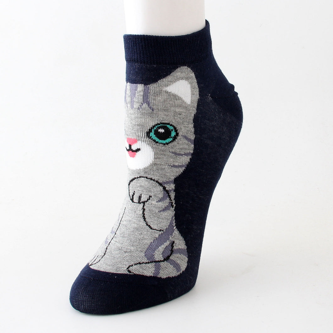 american shorthair cat socks cute