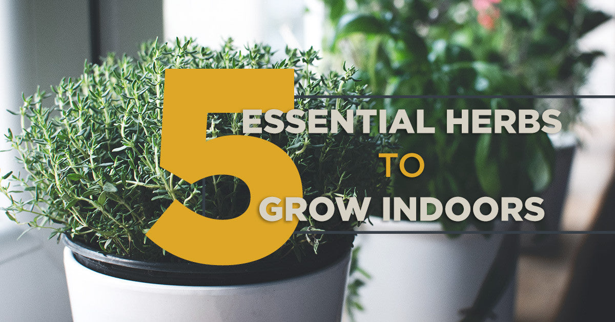 5 Essential Herbs to Grow Indoors
