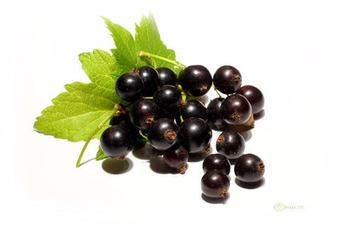 Blackcurrant|Cassis