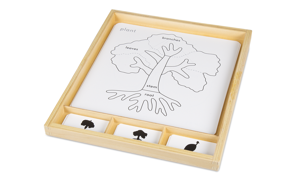 Botany Activity Set