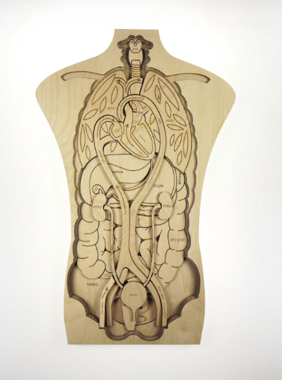 What's Inside Me; Layered Human Body Puzzle