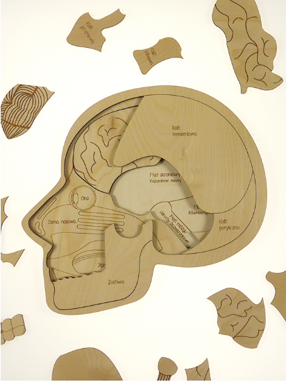 What's in my Head Puzzle; layered anatomy puzzle