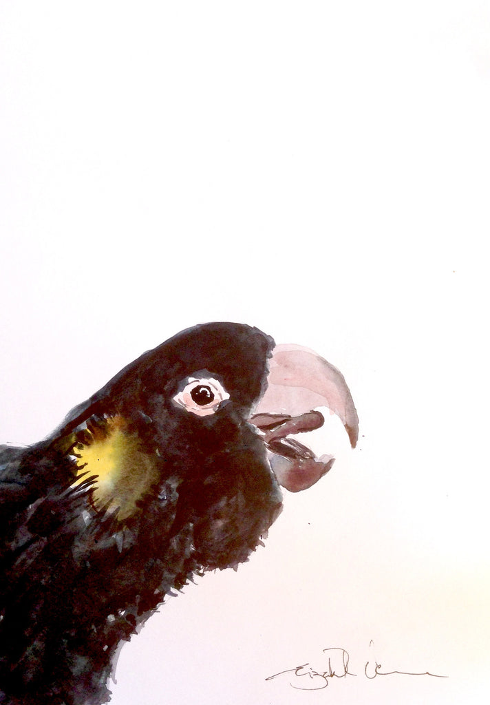 black cockatoo - happy chappy!