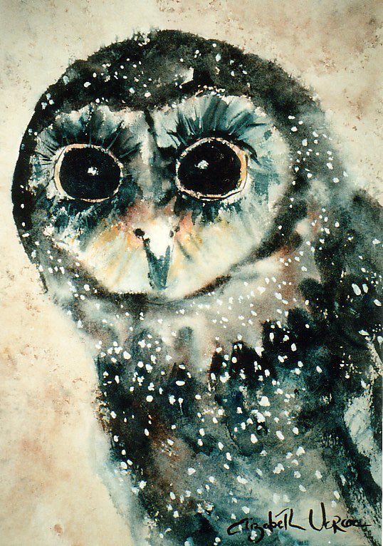 Card (LARGE Tracks collection) - Sooty Owl