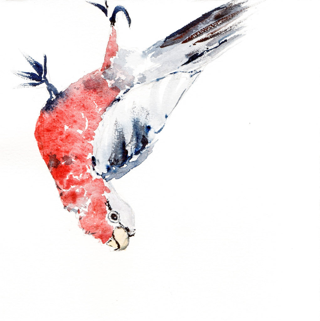 Card (Tracks collection) - galah, rainy day fun