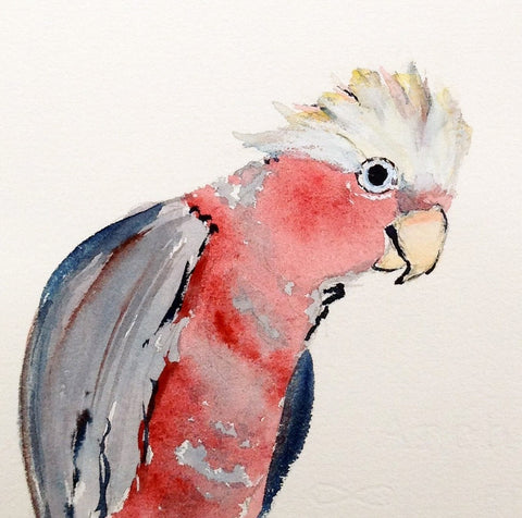 Card (Tracks collection) - galah, well, hello!