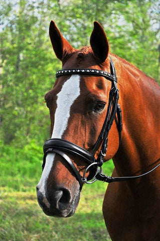 Red Barn by KL Select Cadence Dressage Bridle