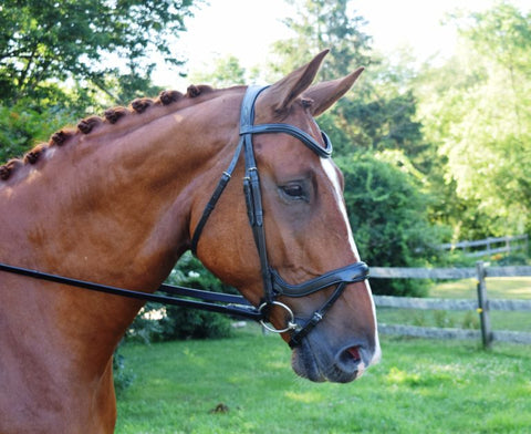 Red Barn by KL Select Arena Ergonomic Bridle
