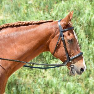 Bobby's English Tack Eventer Heavy Duty Padded Bridle