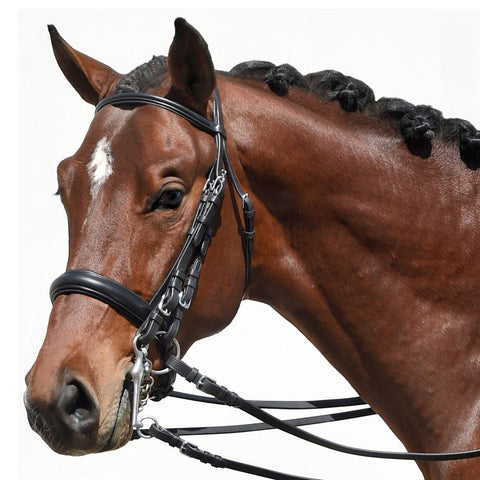 Bobby's Tack Padded Dressage Weymouth Double Bridle