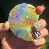 Rainbow Aura Ammonite