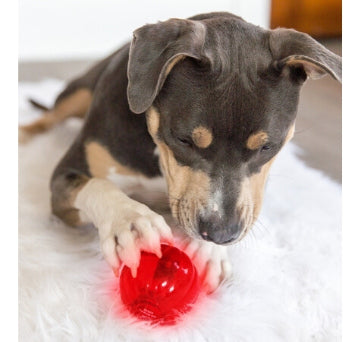 Babble Balls Interactive Dog Toys