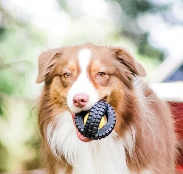 X Tire Ball Dog Toys