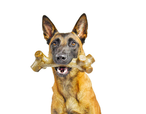 BarkBone Stick with Peanut Butter Flavor Dog Chew Toy for Aggressive Chewers, Made in USA - Pet Qwerks | Interactive Dog Toys