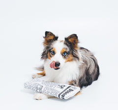 Krinkle and Squeaky Newspaper Plush Dog Toy - Pet Qwerks | Interactive Pet Toys