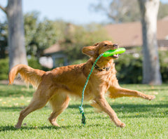 Pickle Fetch Tug 'n Toss Squeaky Dog Toy with Attached Knotted Rope - Pet Qwerks | Interactive Dog Toys