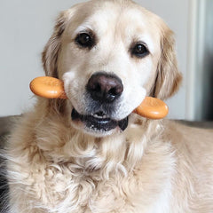 Flavorit Bone Sweet Potato Flavor Infused Dog Chew Toy, Made in USA - Pet Qwerks | Interactive Dog Toys