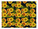 Sunflowers on Black Background - Icing - ISA006