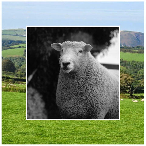 British Wool Natural Fibre Knitwear Made in England