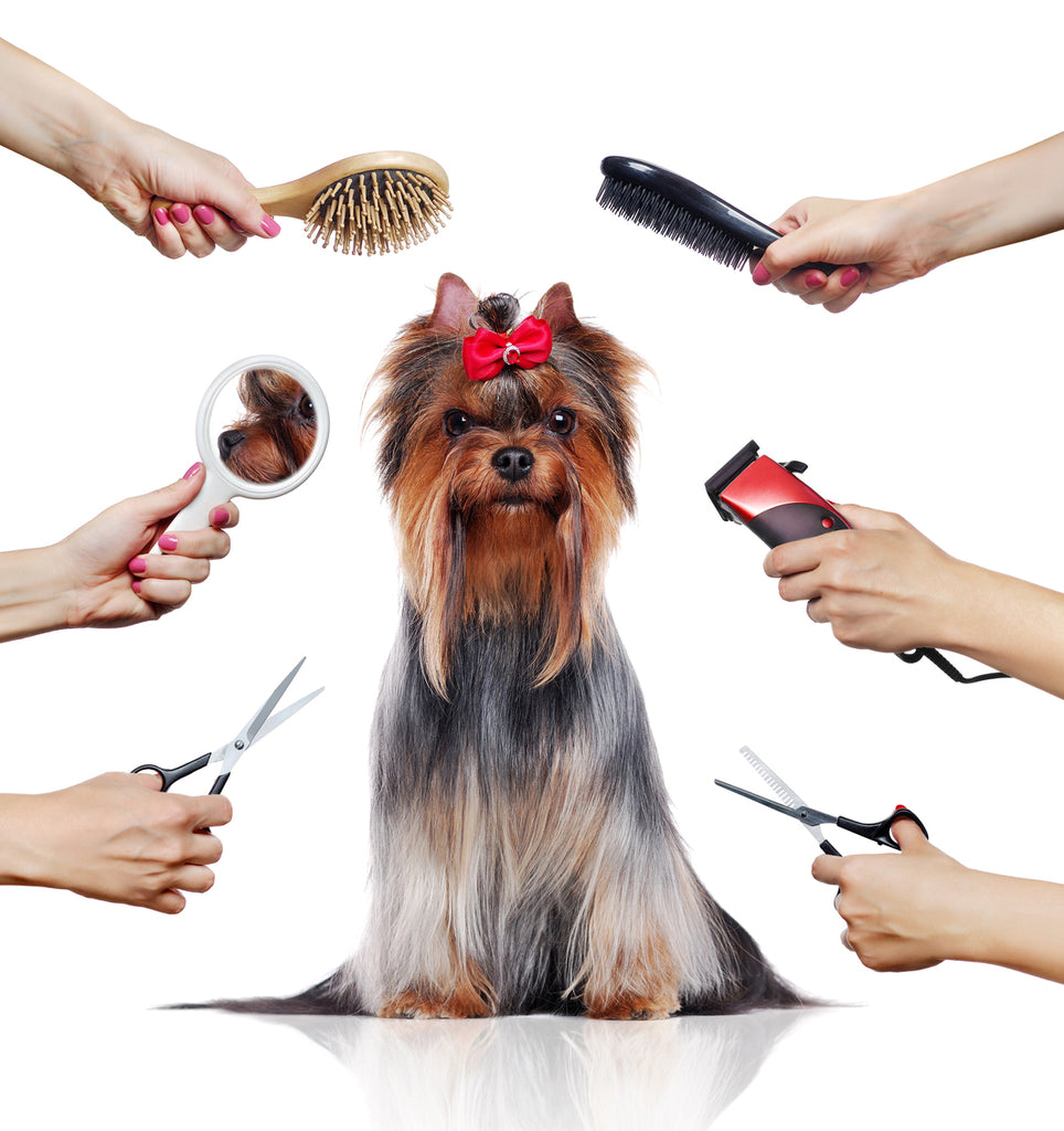 5 Ways Shaving Your Dog Causes a Lifetime of Problems
