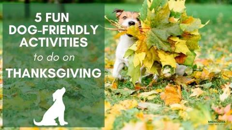5 Fun Activities to do with Dogs on Thanksgiving