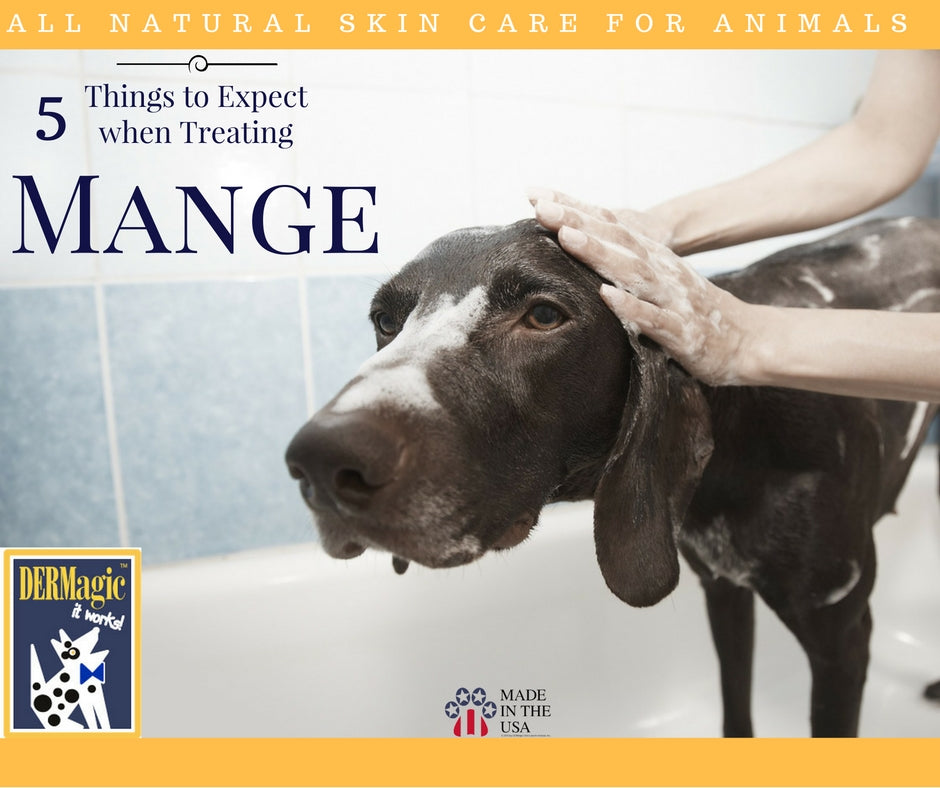 5 Things to Expect when Treating Mange