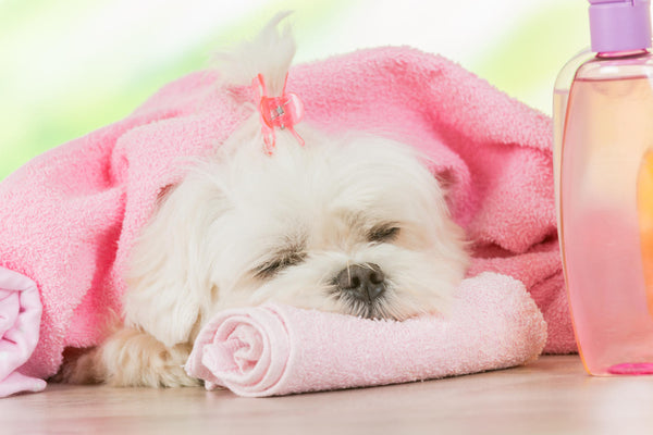Treating your dog to a spa day using DERMagic!