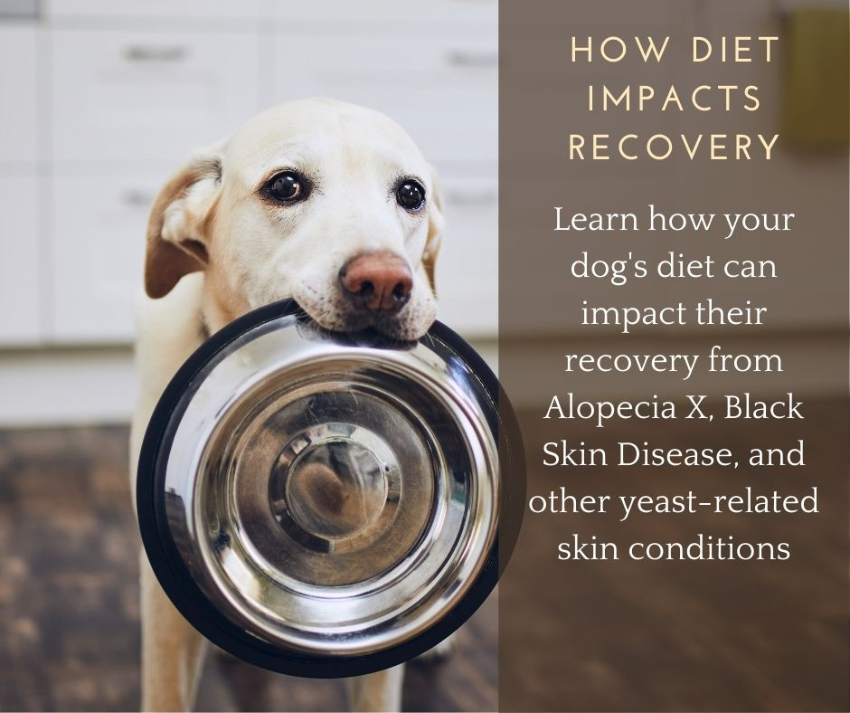 How Diet Impacts Your Dog's Recovery from Alopecia X and BSD