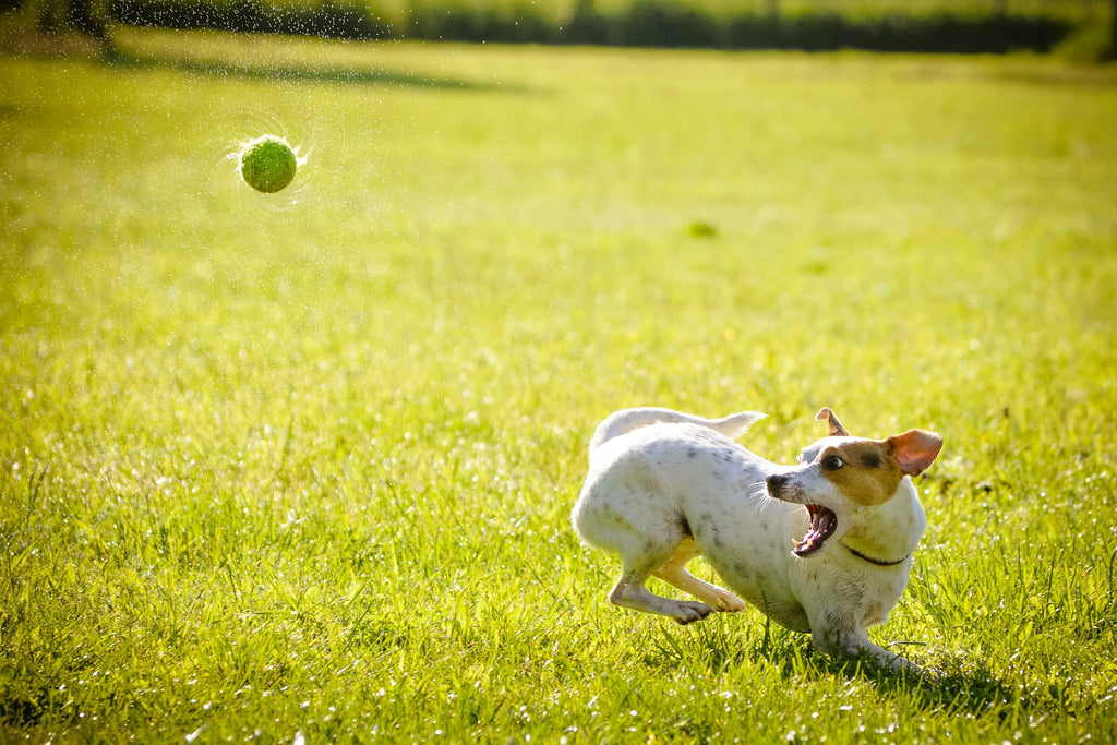 Tricks You Need to Teach your Dog