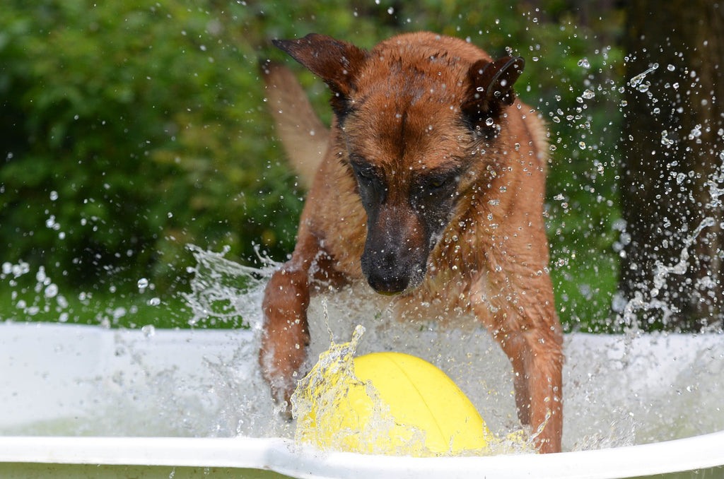 Five Ways to Keep Your Dog Cool this Summer